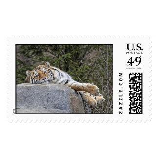 Lazy Day Tiger Postage