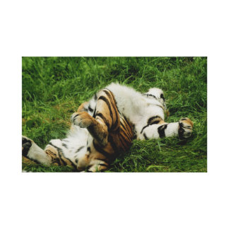 Lazy Day Tiger Wrapped Canvas Print