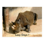 Lazy Days ! Postcard