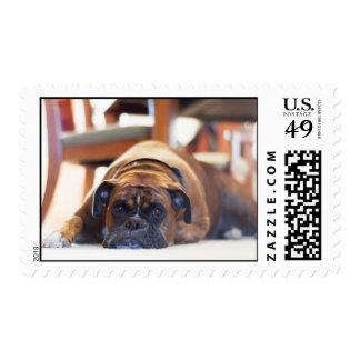 Lazy dog postage