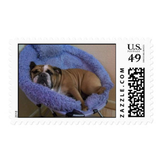 Lazy English Bulldogs Book of Stamps