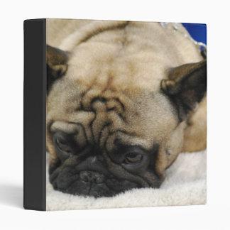 Lazy French Bulldog Binder