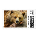 Lazy Grizzly Bear Painting Postage Stamps