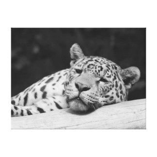 """Lazy Leopard"" Canvas Print"
