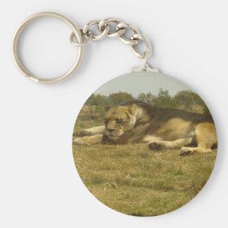 Lazy Lioness Keychain