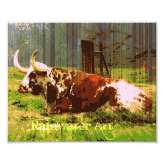 Lazy Longhorn Photo Print