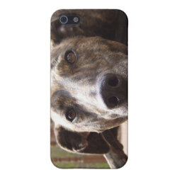 Case Savvy iPhone 5 Matte Finish Case with Bull Terrier Phone Cases design