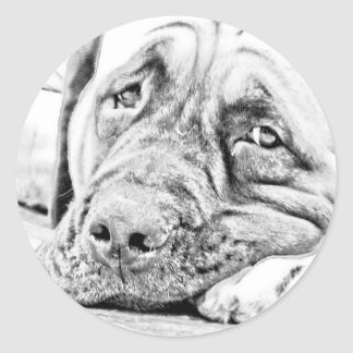 Lazy Mastiff Classic Round Sticker
