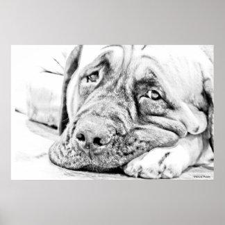 Lazy Mastiff Print