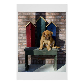 Lazy Puppy I Posters