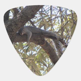 Lazy Rock Squirrel Guitar Pick