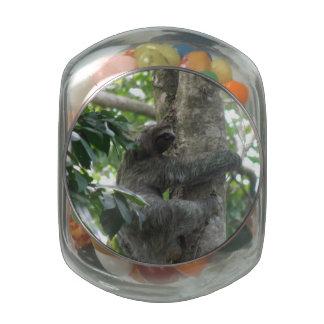 Lazy Sloth Glass Jars