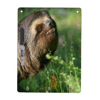 Lazy Sloth Dry Erase Board