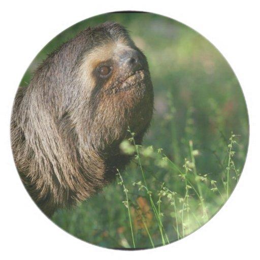 Lazy Sloth Plate