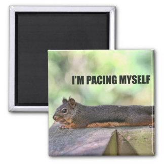 Lazy Squirrel Photo Refrigerator Magnets
