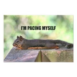Lazy Squirrel Photo