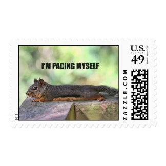 Lazy Squirrel Photo Postage Stamps