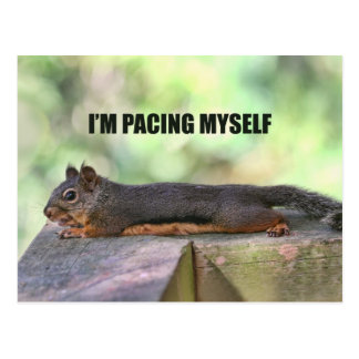 Lazy Squirrel Photo Postcard