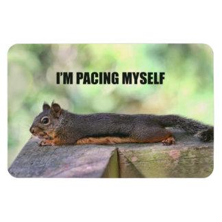 Lazy Squirrel Photo Rectangular Magnets