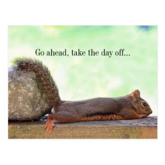 Lazy Squirrel Postcard
