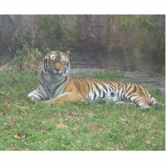 Lazy Tiger Statuette