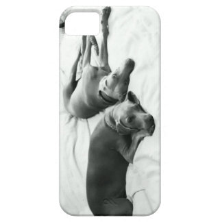 Lazy Weimaraners iPhone 5 Cover
