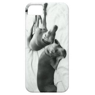 Lazy Weimaraners iPhone SE/5/5s Case