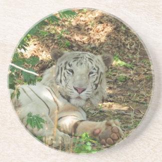 Lazy white tiger sandstone coaster