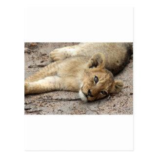 Lazylion cub postcard