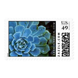 LD-aeonium-stamp Postage