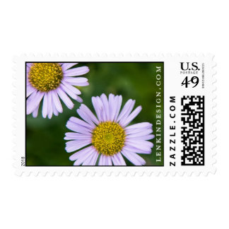 LD-osteospermum-stamp-2 Postage