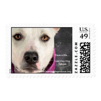 LDDR Postage Stamps