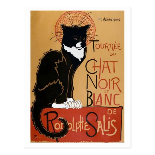 Le chat noir et blanc postcard zazzle for Le noir et le blanc