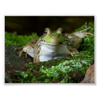Le estoy mirando poster de la rana mugidora
