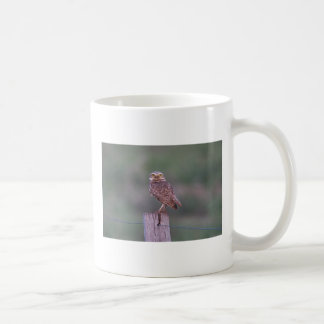 Le estoy mirando taza