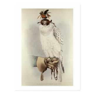 Le Groenlandais, Faucon Blanc Mue, from 'Traite de Postcard