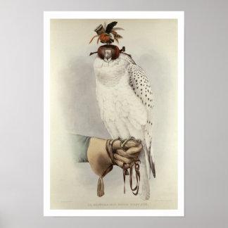 Le Groenlandais, Faucon Blanc Mue, from 'Traite de Poster