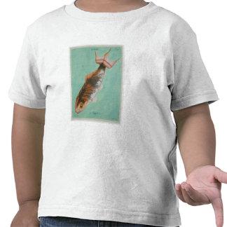 Le Superbe, grabado por el ordenancista de Camisetas