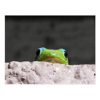 Le veo gecko tarjetas postales
