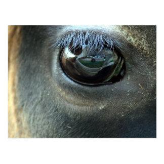 Le veo, ojo de la vaca del jersey tarjetas postales