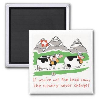 Lead Cow Sq Magnet