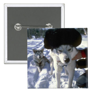 Lead dog with hat button