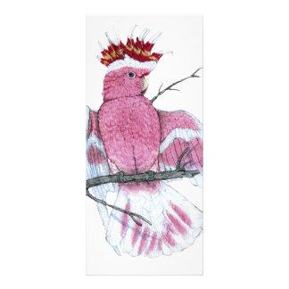 Leadbeater Cockatoo Rack Card Design