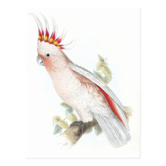 Leadbeater's Cockatoo by Edward Lear Post Cards