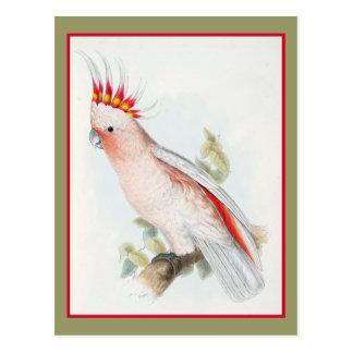 Leadbeatter Cockatoo Post Card