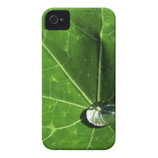 Leaf and Droplet iPhone 4 Covers