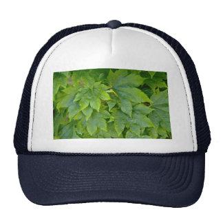 Leaf and flower patterns hats