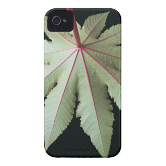 Leaf and Stem iPhone 4 Case