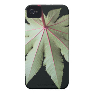 Leaf and Stem iPhone 4 Cover