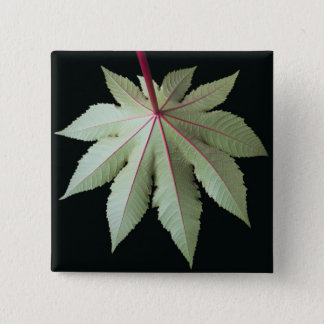 Leaf and Stem Pinback Button